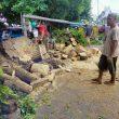 Pohon Tumbang di Ternate Timpa Atap Pasar hingga Tiang Lampu