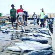 Akademisi: Program LIN di Maluku Utara Bagai Menelan Buah Simalakama