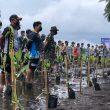 Tanam Ribuan Bibit Mangrove, Danlanal: Mengurangi Ancaman Abrasi di Pesisir Ternate